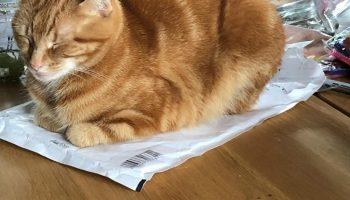 Dagboek: katten-dag