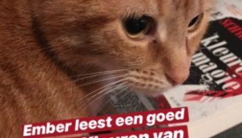 Dagboek: Twee keer film en heel Nederland door